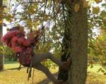 Koku kopšanas prasmes